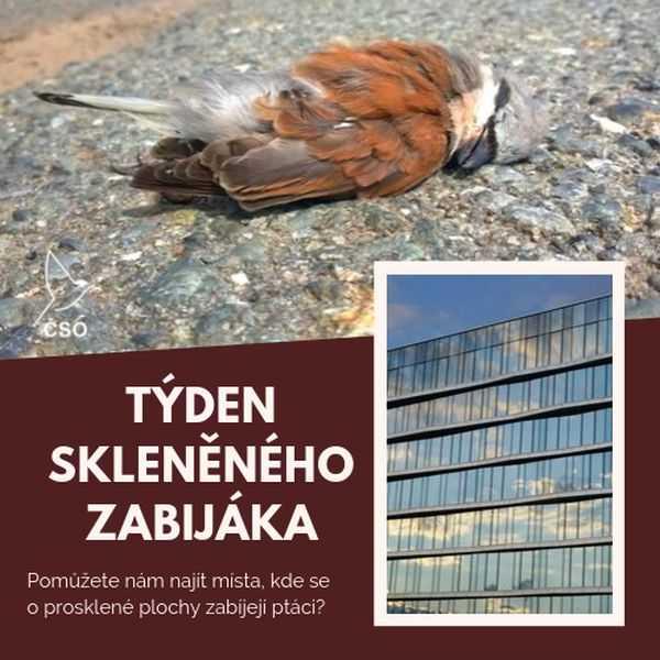 Regionalist: Týden Skleněného zabijáka – víte o sklech, která zabíjejí  ptáky?